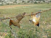 Британских военных обвинили в потворстве истреблению 800 тысяч птиц на Кипре