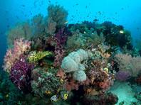 В Индонезии британский круизный лайнер повредил уникальные коралловые рифы архипелага Раджа Ампат