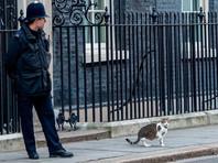 Кот Ларри попал под угрозу увольнения с поста главного мышелова резиденции премьер-министра Великобритании