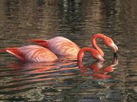 В чешском зоопарке дети забили камнями красного фламинго