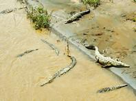 Молодой австралиец прыгнул в кишащую крокодилами реку, чтобы впечатлить британскую туристку