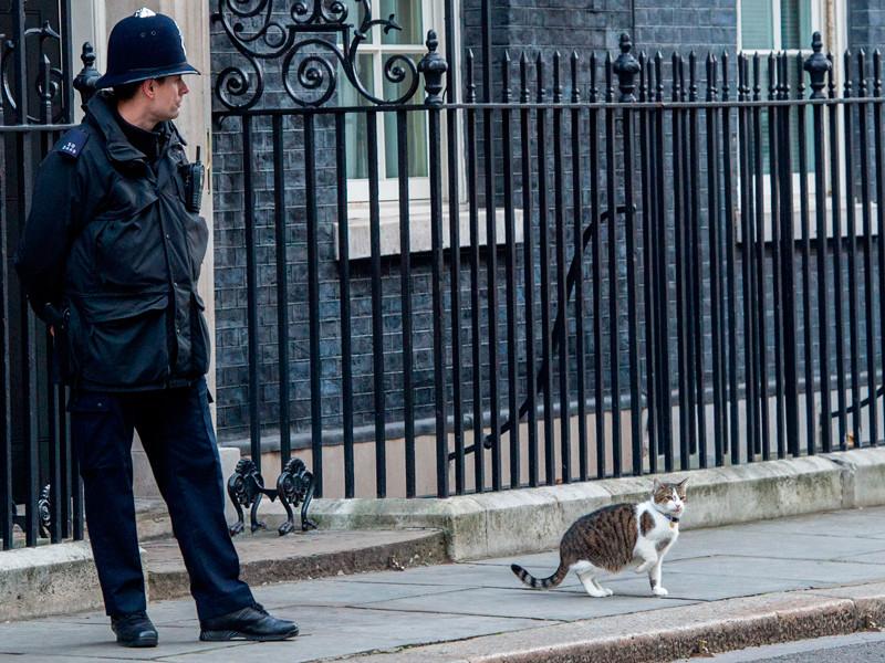 Кот Ларри может лишиться поста главного мышелова резиденции британского премьер-министра