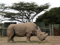 """Последний в мире самец северного белого носорога """"завел"""" аккаунт в Tinder"""