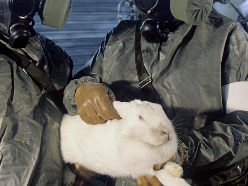 """В Гонконге детскую площадку украсили кроликами-зэками по имени Путин и """"Кирененко"""""""