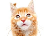 Мейн-кун, претендующий на звание длиннейшего на планете кота, производит фурор в Instagram