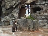 В Японии пингвин, которого бросила подруга, влюбился в героиню аниме