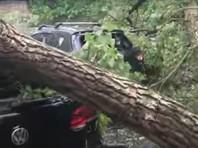 На Киев вслед за Москвой обрушился ураган, поваливший деревья на машины
