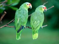 В Коста-Рике домохозяйку приговорили к штрафу в 850 000 колонов за незаконное содержание двух попугаев в клетке