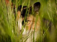 В Австралии создадут многокилометровую зону, свободную от диких кошек