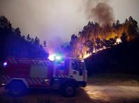 Число жертв лесного пожара в Португалии превысило 60