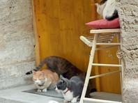 Во Франции в туристическом городке около 200 кошек погибло от отравления