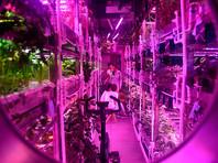 """""""Лунный дворец"""" состоит из основного модуля площадью в 42 квадратных метра, предназначенного для жизни волонтеров, и двух модулей площадью от 50 до 60 квадратных метров для выращивания растений"""