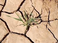 В Министерстве сельского хозяйства США под влиянием администрации Трампа решили говорить об изменении климата другими словами