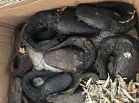 Немецкие таможенники сожгли посылку с 20 кг деликатесных личинок и тухлых змей