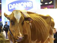 Компания Danone перевозит 5 тысяч коров из Европы в Сибирь из-за роста цен на молоко в РФ