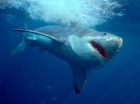 В Хургаде от нападения белых акул пострадал один человек