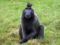 Британский фотограф победил в двухлетней тяжбе за авторские права с обезьяной, сделавшей селфи на его камеру