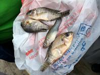 В мексиканском городе Тампико выпали осадки в виде рыбы (ФОТО, ВИДЕО)