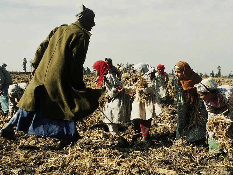 В мире 40,3 миллиона человек являются жертвами современных форм рабства. Об этом говорится в опубликованном во вторник, 19 сентября, докладе Международной организации труда (МОТ) и австралийской неправительственной организации Walk Free Foundation, подготовленном при содействии Международной организации по миграции (МОМ)