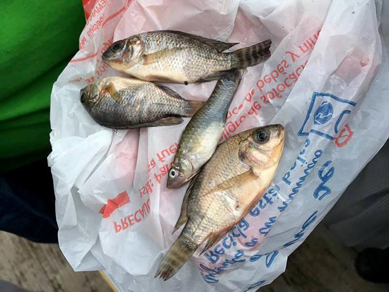 В мексиканском городе Тампико выпали осадки в виде рыбы
