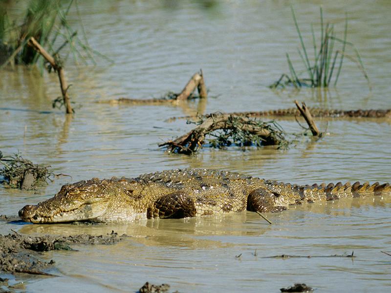 На Шри-Ланке крокодил съел журналиста The Financial Times