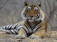 В Казахстане запустили программу возрождения популяции диких тигров