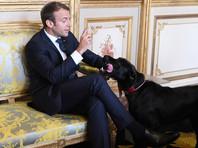 Собака президента Франции попала в объективы телекамер, когда справляла нужду в Елисейском дворце