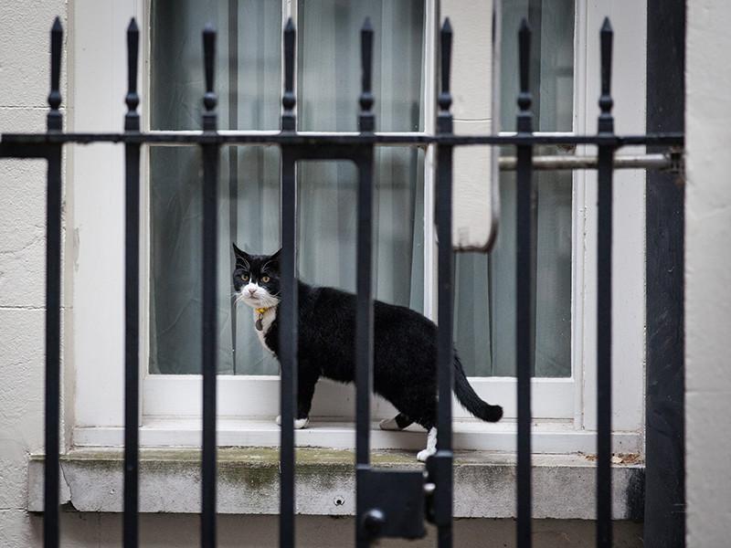 52-летний мужчина хотел попасть в Швецию, чтобы забрать оттуда своего любимого кота, который находится в кошачьем приюте в городе Борос на западе страны. Животное попало в питомник три года назад, когда его хозяина арестовали за сообщение о бомбе на борту самолета Санкт-Петербург - Хельсинки