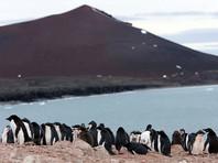 Колония пингвинов Адели в Антарктиде второй раз за четыре года лишилась почти всего потомства
