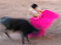В Мексике во время корриды бык проткнул горло матадору. Раненый тореадор вернулся на арену и убил животное