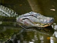 В Австралии крокодила подозревают в убийстве 79-летней пенсионерки с деменцией