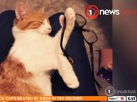 """""""Первая кошка Новой Зеландии"""" погибла под колесами машины возле резиденции премьер-министра, Twitter погрузился в скорбь"""