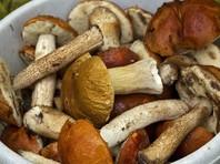 Во Франции на грибах, привезенных из России, обнаружили следы радиоактивного цезия