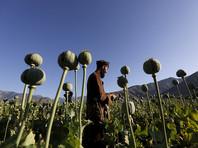 ООН зафиксировала скачок производства опиума в Афганистане, угрожающий всплеском наркомании в РФ