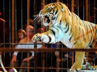 По улицам Парижа бродил бежавший из цирка тигр