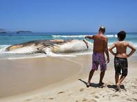 На белоснежный песок знаменитого пляжа Рио-де-Жанейро выбросило зловонную и взрывоопасную тушу кита (ФОТО)