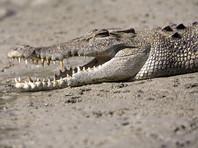 Австралийцев спасли после пятидневного проживания на крыше автомобиля в компании крокодилов (ВИДЕО)