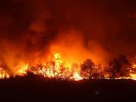 От сильных природных пожаров Калифорния уже пострадала в октябре, тогда в огне погибли по меньшей мере 40 человек, еще около 900 пропали без вести. По числу жертв эти пожары стали самыми страшными в истории Калифорнии. Огнем были уничтожены не менее 5,7 тысячи домов и построек