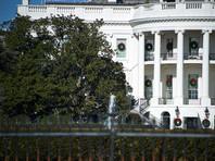 Двухсотлетнюю магнолию на лужайке Белого дома кронировали вместо полной вырубки