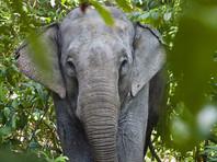 Туристический автобус в Китае атаковал дикий слон (ВИДЕО)