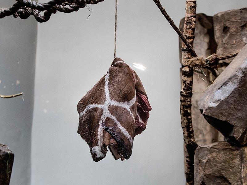 Копенгагенский зоопарк опроверг обвинения в использовании домашних животных в качестве корма хищникам