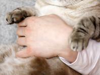 В Швеции благодаря Facebook две женщины смогли спустя годы найти своего кота Адольфа