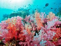 В Таиланде двух россиянок задержали за кражу кораллов