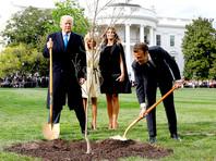 Посаженный Трампом и Макроном дуб убрали с лужайки Белого дома