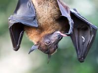 В Индии вспышка переносимого летучими лисицами  вируса Нипах унесла жизни 10 человек