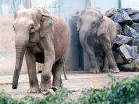 Слон Непал, из-за которого Брижит Бардо грозилась стать россиянкой, скончался в Монако