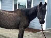 В  суд США  поступил крупный иск  от коня  к  бывшей хозяйке: морозила и плохо кормила