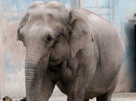 В числе прочих за Беби и Непала вступилась Бардо, возглавляющая Фонд защиты животных. Она обратилась к руководству страны с просьбой отменить решение лионских властей