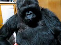 В Калифорнии на 47-м году жизни скончалась горилла Коко, освоившая язык глухонемых