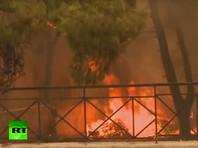 Из-за лесных пожаров  под Афинами погибли десятки человек